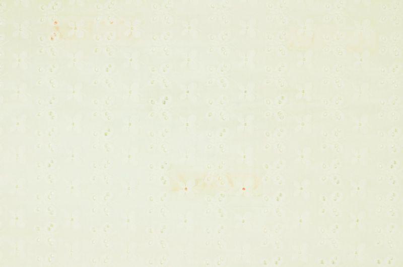 Bílé plátno s vyšívanými kytičkami- madeira, š.145 cm