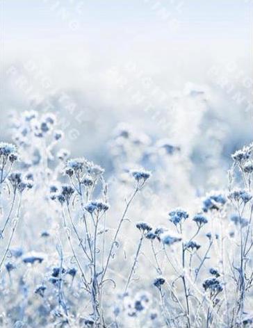 Bílý elastický úplet s jemným modrým květinovým vzorem , panel po 75 cm, š. 170 cm